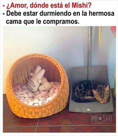 Animal Memes, Funny Animals, Cute Animals, Funny Spanish Memes, Funny Memes, Derp, Best Memes, Funny Posts, Cute Cats