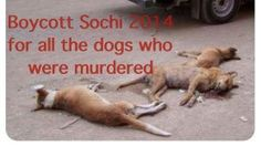 THIS IS RUSSIA!!! THIS IS THE OLYMPICS 2014!!! Dogs fed poison and left to die a horrible death agonizing in the streets!!! Stop the execution of stray dogs! Be humane! I WILL NOT support the OLYMPICS!!! Sign and share!!!! PLEASE!!!! http://www.change.org/petitions/basya-services-stop-the-execution-of-stray-dogs-be-humane