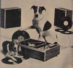 Dogs Vinyl two of my favorite things Vinyl Record Player, Record Players, Vinyl Records, Lps, Foto Madrid, Music Machine, Music Illustration, Vinyl Junkies, Vintage Records