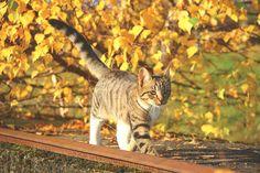 Éloigner les chats