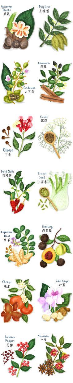 Beautiful spices illustrations illustrated by UK based food illustrator Liv Wan. Http://www.livwanillustratiion.com