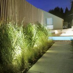 Warrandyte - Gardens At Night
