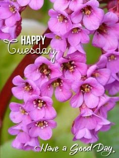 Best Perennials, Hardy Perennials, Exotic Flowers, Purple Flowers, Horticulture, Elephant Ears, Tomato Plants, Shade Plants, Planting Seeds