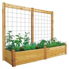 Gronomics 48 in. x 95 in. x 19 in. Raised Garden Bed with 95 in. W x 80 in. H Safe Finish Trellis Kit Gronomics 48 in. x 95 in. x 19 in. Raised Garden Bed with 95 in. W x 80 in. H Safe Finish Trellis Kit Cedar Raised Garden Beds, Raised Vegetable Gardens, Raised Beds, Vegetable Gardening, Flower Gardening, Raised Gardens, Raised Garden Bed Design, Gardening Shoes, Vegetable Planters
