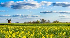 The Great Denmark Plan to Become a 100% Organic Country