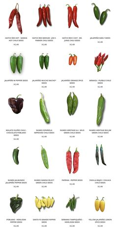 Get seeds for the famous Hatch Green Chile, Poblano, Big Jim and other green and red chiles. High Calorie Diet, Green Chile Stew, Types Of Peppers, Herbalife Shake Recipes, Coconut Oil Weight Loss, Hot Sauce Recipes, Pepper Seeds, Growing Seeds, Asian Food Recipes