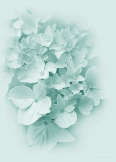 Beautiful pastel pink Hydrangea flowers photography art for your home or office decor. Photography by Jennie Marie Schell. Green Hydrangea, Hydrangea Flower, Monochrome Photography, Floral Photography, Pretty Pastel, Pastel Pink, Pastel Flowers, Flower Artwork, Color Harmony