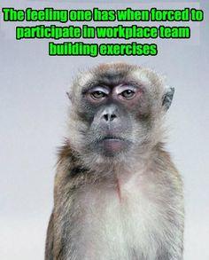 30 Hilarious Teacher Memes That Every Teacher Will Understand - Teacher Humor - . - 30 Hilarious Teacher Memes That Every Teacher Will Understand – Teacher Humor – - Teacher Humour, Teaching Memes, Teaching Theatre, Teaching Reading, Classroom Memes, Classroom Signs, Frases Humor, Ecards Humor, Memes Humor