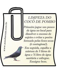 Dicas da Zezé - COMO LIMPAR O COCÔ DE POMBO SEM SE CONTAMINAR
