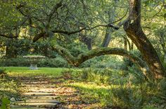 The leaves are starting to fall on the garden path. Photo by Mae Axelrod. Natural Garden, Garden Paths, Acre, Home And Family, Leaves, Fall, Plants, Autumn, Fall Season