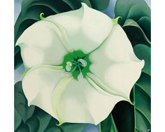 Georgia O'Keeffe painting sells for $44m at Sotheby's, sets auction record for female artist