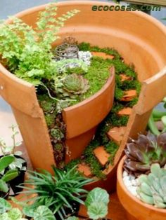 Con una maceta rota, un jardín miniatura
