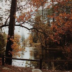 urbanoutfitters Hanging on to the last of those leaves. Leelah, Autumn Cozy, Autumn Fall, Autumn Leaves, Autumn Forest, Autumn Aesthetic, Quote Aesthetic, Season Of The Witch, All Nature