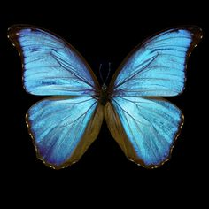 Butterfly III - Heiko Hellwig - pictures, photography, photo art online at LUMAS