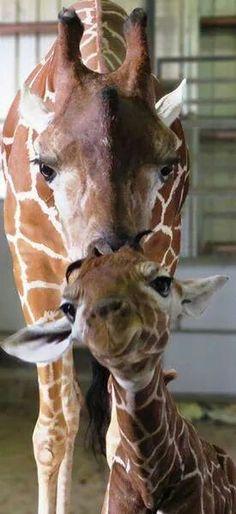 Momma kisses