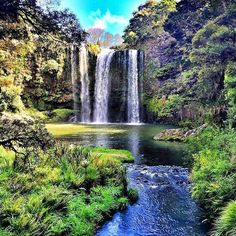 Whangarei Falls photo stop on our Bay of Islands bus on the weekend. @heymissfozzie #kiwiexperience #travelkiwi