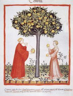 Tacuinum Sanitatis