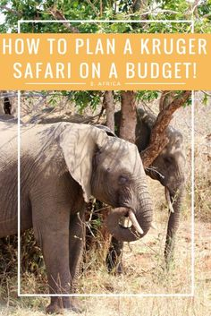 Safaris are crazy expensive right? Think again! We recently did a trip to Kruger on a budget and it was amazing! Here I outline all of your options, how much we spent and how you could make it cheaper!
