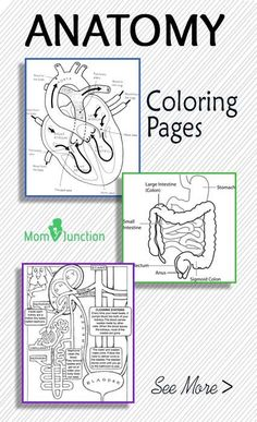 Nurse Discover Top 10 Anatomy Coloring Pages For Your Toddler Anatomy is the study of the structure of human animals and plants. Now Introduce your child to anatomy with these 10 free printable anatomy coloring pages. Science Classroom, Teaching Science, Science For Kids, Science Activities, Science Projects, Human Body Activities, Teaching Geography, Human Body Crafts, Social Studies Activities