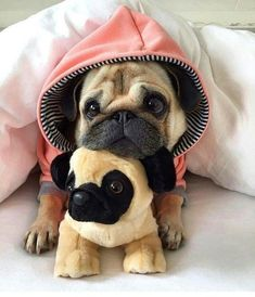 cute pug puppies Products Stunning hand crafted pug accessories and jewelery available at Paws Passion Shop! Show your pug puppy how much you love them by wearing our m