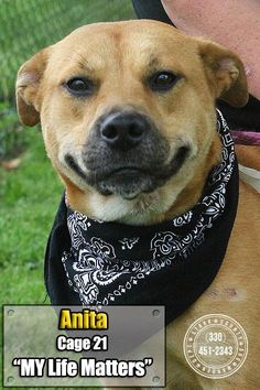 Meet ISO-3 Anita, a Petfinder adoptable Retriever Dog | Canton, OH | Release date 5/27. Poor Anita, she was hoping her family would come for her! She is already...