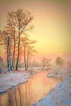 A Scottish Winter Of Pinks And Gold; The Trees Are Bare; Ground Snowy And Cold.