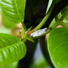 """@cassidymister  #cassidyMRphotography """"Rings & things ✨ Much like these lush green vines, Morgan + Matt's love is continuously growing and remaining entangled in sweetness.…"""""""