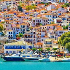 Skopelos ...Who's been to the vibrant island of #Skopelos ??? . ..  ..  .. : @vasso_tsoulou ..