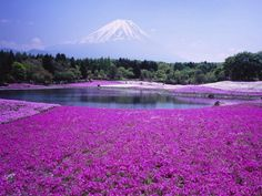 Amazing picture of Mount Fuji in Japan ! Places Around The World, Oh The Places You'll Go, Places To Travel, Places To Visit, Around The Worlds, What A Wonderful World, Beautiful World, Beautiful Places, Beautiful Flowers
