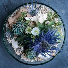 Succulent arrangement (from top looking down)  Sand or people base mixed with blue flower for color.