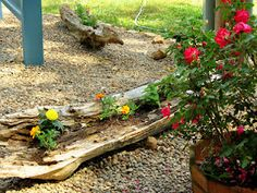 I have two pieces of driftwood that I have added to my flower garden.  After filling in the cracks with dirt, I added flowers to the logs.