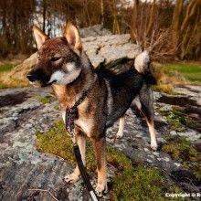 Général | Primitif Addict - Education canine et Comportement canin - Part 3