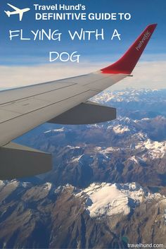 First time flying with a dog  Check out this definitive guide to flying  with an 67a3aa0bc18