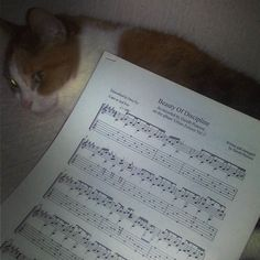 Isis expects great things from me. I'm afraid she's going to be disappointed  #guitar #icantplay #cat #crazycatlady #music #sheetmusic #crazycatladies #catsofinstagram #cats #catstagram #ihavenoideawhatimdoing  #failingatlife #disappointed #calico #foreveralone #catoftheday by miss.cinders