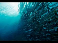 World Travel and Dive Sites Parrot Fish, Diving, Waves, Island, World, Outdoor, Outdoors, Scuba Diving, Islands
