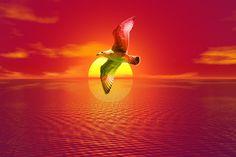 Free illustration: Gull, Sunset, Sea, Seagull - Free Image on Pixabay - 1835351