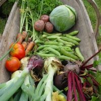Tips for growing Hydrangea   Live Dan 330