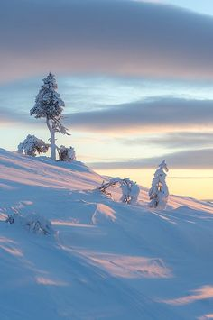 Tree on the Fell I Love Winter, Winter Day, Winter White, Winter Christmas, Winter Snow, Winter Schnee, Voyage Europe, Winter's Tale, Snow Scenes