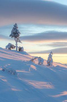 Tree on the Fell I Love Winter, Winter Snow, Winter White, Winter Christmas, Winter Schnee, Voyage Europe, Winter's Tale, Snow Scenes, Winter Beauty