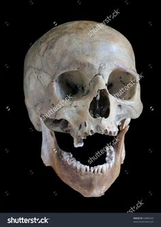 Skull Of The Person On A Black Background. Стоковые фотографии 63883432 : Shutterstock