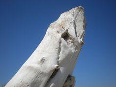 sea+wood