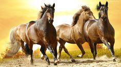 Dzikie, Konie, Galop, Droga
