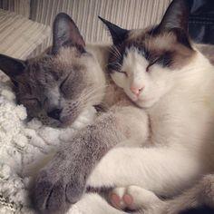 Sueño felino