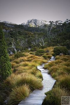 Wombat-way. (Path to Wombat Pool, Cradle mountain, Tasmania, AUS) Places To Travel, Places To See, Mountain Love, Wombat, Australia Travel, Queensland Australia, Western Australia, Australia Snow, The World's Greatest