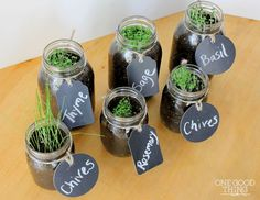 Mason Jars | How To Germinate Seeds A Homesteader's Guide To Sprouting Seeds