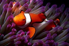La caótica belleza del océano capturada en estas 15 impresionantes fotografías