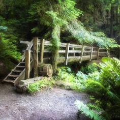 #pacificnorthwest #pnw #nature #washington #crescentlake #olympicnationalpark #travel #hike #trails #bridge #outdoor #Padgram