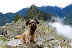 Oscar, o cachorro que viajou o mundo com a dona para conscientizar as pessoas sobre os animais abandonados, em Machu Picchu. (© Joanne Lefson) #Dog #Traveller #Travel