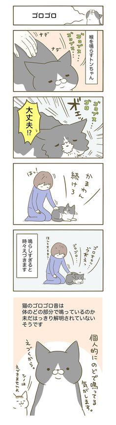 うちの猫がまた変なことしてる。|卵山玉子(たまごやま・たまこ)|【期間限定!毎日連載】「うちの猫がまた変なことしてる。」第9話 |コミックエッセイ劇場