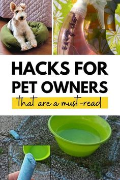Do you have a cat? Check out these awesome pet hacks! From using baking soda to get rid of cat urine smell to litter box tips and tricks! Cat Urine Smells, Litter Box, Diy Stuffed Animals, Four Legged, Creatures, Hacks, Pets, Reading, Awesome
